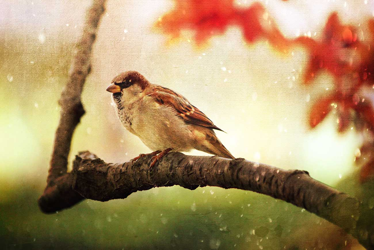 Illustration of sparrow on branch for bedtime story The Dog and the Sparrow