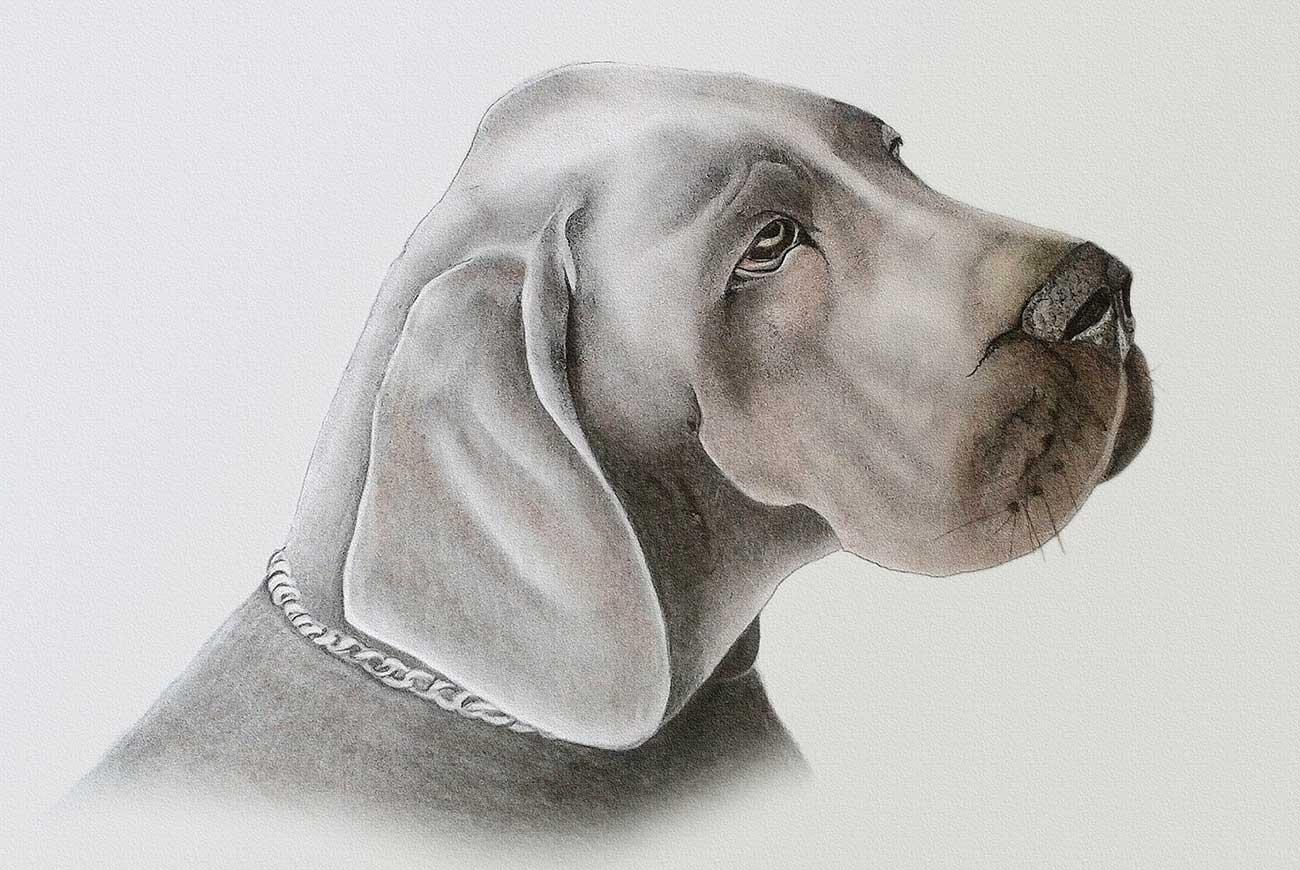Illustration of dog for short story for kids, Old Sultan