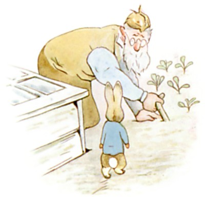 Original Illustration of Mr McGregor in the garden, from Tale of Peter Rabbit bedtime story