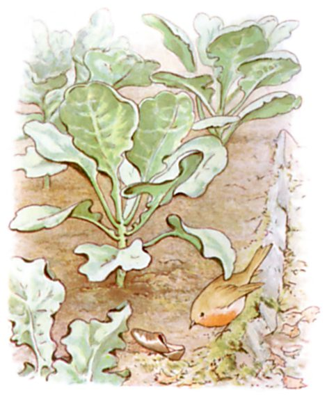 Original Illustration of vegetable patch, from Tale of Peter Rabbit bedtime story
