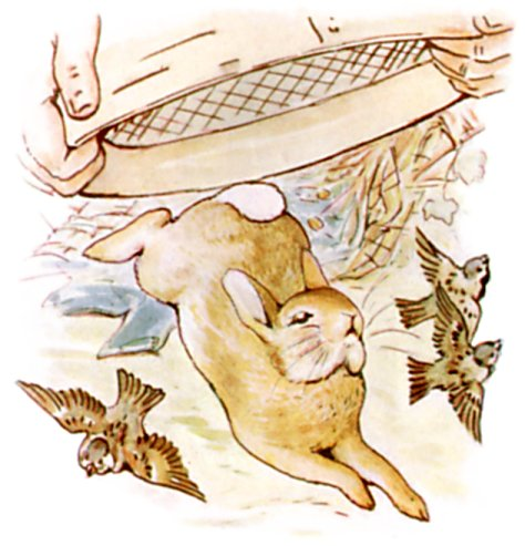 Original Illustration of rabbit and birds, from Tale of Peter Rabbit bedtime story