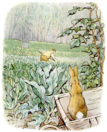 Original Illustration of Rabbit and vegetable patch from Tale of Peter Rabbit bedtime story