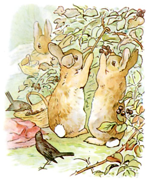 Original Illustration of rabbits eating berries, from Tale of Peter Rabbit bedtime story