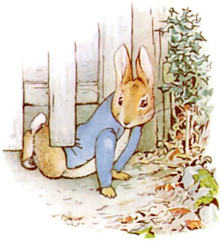 Original Illustration of rabbit squeezing under garden gate, from Tale of Peter Rabbit bedtime story