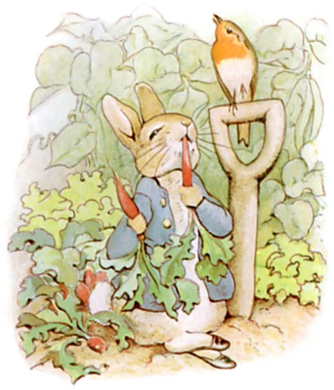 Original Illustration of rabbit eating radishes, from Tale of Peter Rabbit bedtime story
