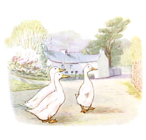 Beatrix Potter illustration of geese walking on road for bedtime story Tom Kitten