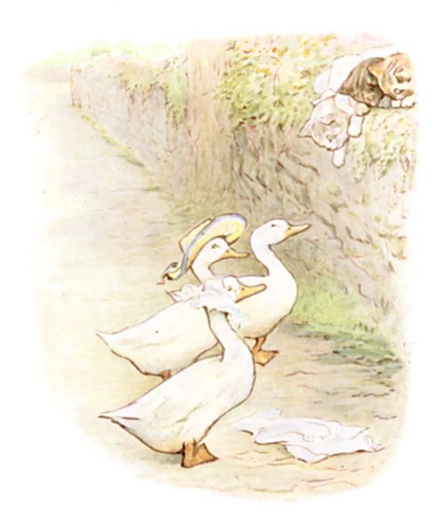 Beatrix Potter illustration of geese with hat for bedtime story Tom Kitten