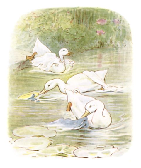 Beatrix Potter illustration of swimming geese for bedtime story Tom Kitten