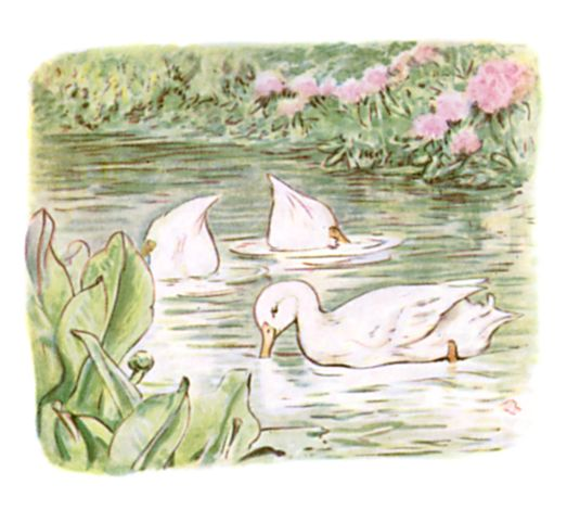 Beatrix Potter illustration of geese in pond for bedtime story Tom Kitten
