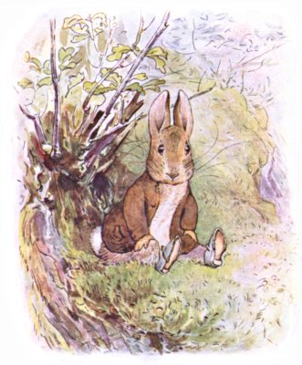Original Illustration of  rabbit in wood for Beatrix Potter Benjamin Bunny bedtime story
