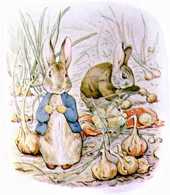 Original Illustration of rabbits stealing vegetables, for Beatrix Potter Benjamin Bunny bedtime story