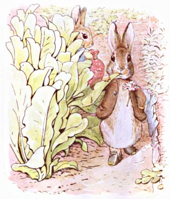 Original Illustration of rabbits eating produce in vegetable garden, for Beatrix Potter Benjamin Bunny bedtime story