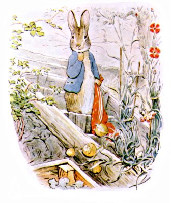 Original Illustration of Peter Rabbit in the garden, for Beatrix Potter Benjamin Bunny bedtime story