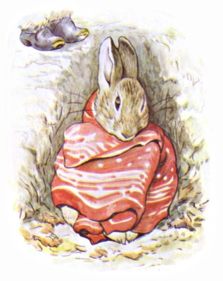 Original Illustration of  bunny in a blanket, for Beatrix Potter Benjamin Bunny bedtime story