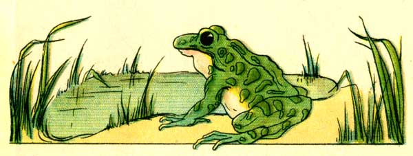 Original illustration of Freckle Frog sitting by pond, for the kids short story How Freckle Frog Made Herself Pretty