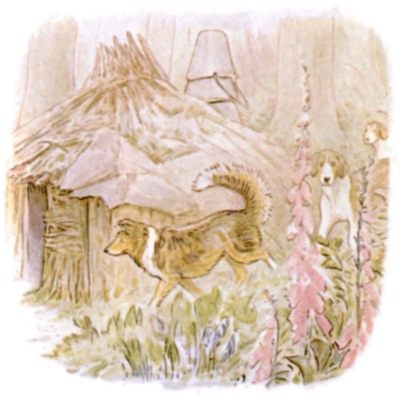 Vintage Beatrix Potter illustration of collie dogs in garden, for Jemima Puddleduck bedtime story