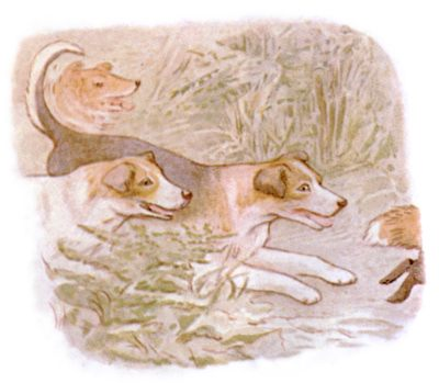 Vintage Beatrix Potter illustration of collie dogs running together, for Jemima Puddleduck bedtime story