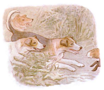 Vintage Beatrix Potter illustration of collie dogs running together, for Jemima Puddleduck bedtime story
