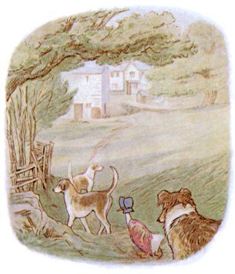 Vintage Beatrix Potter illustration of dogs and goose adventure, for Jemima Puddleduck bedtime story