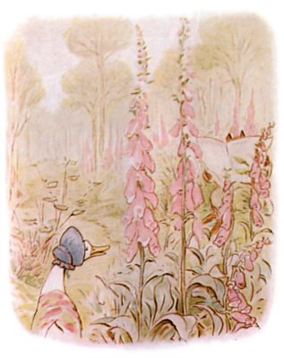 Vintage Beatrix Potter illustration of goose in flowers, for Jemima Puddleduck bedtime story