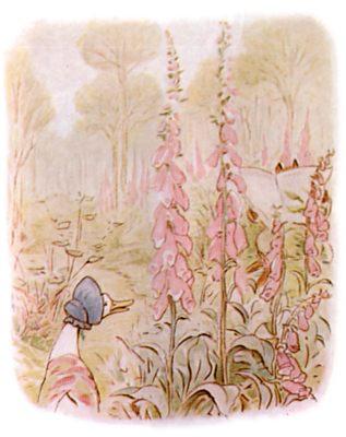 Vintage Beatrix Potter illustration of goose in flowers, for Jemima Puddleduck bedtime story