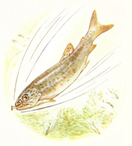 Vintage Beatrix Potter illustration of fish swimming fast through water, from Jeremy Fisher short story for kids