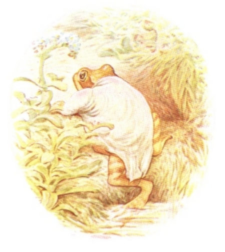 Vintage Beatrix Potter illustration of frog walking through forest, from Jeremy Fisher short story for kids