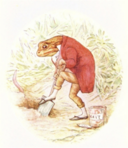 Vintage Beatrix Potter illustration of frog in waistcoat digging hole, from Jeremy Fisher short story for kids