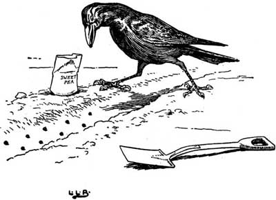 Original illustration of crow by L. Leslie Brooke for the kids short story Johnny Crow's Garden