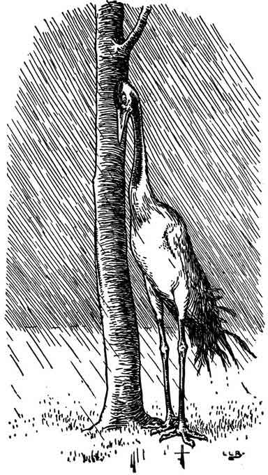 Original illustration of crane in the rain, by L. Leslie Brooke for the bedtime story Johnny Crow's Garden