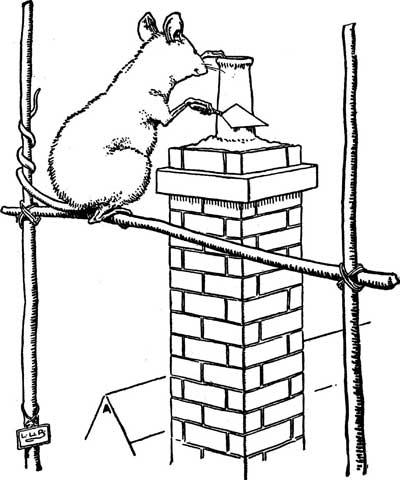 Original illustration of mouse building chimney, by L. Leslie Brooke for the bedtime story Johnny Crow's Garden