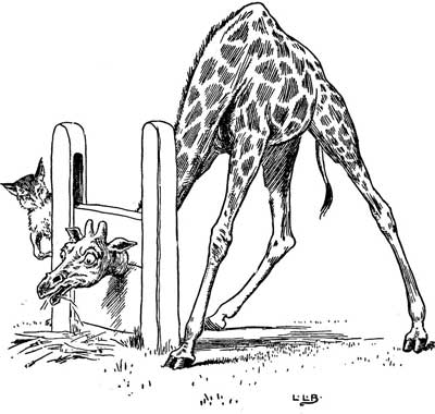 Original illustration of a giraffe trapped by head in stocks, by L. Leslie Brooke for the bedtime story Johnny Crow's Garden