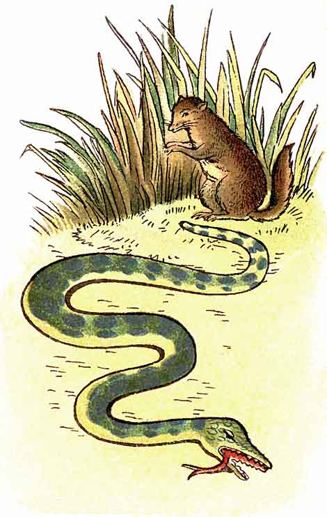 Original illustration of snake and squirrel, by EM and MF Taylor for the kids short story The Jungle Baby
