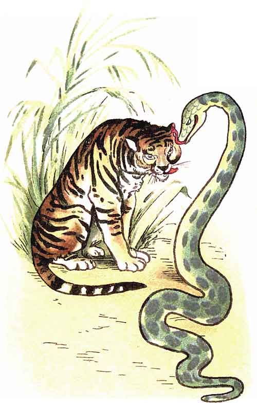 Original illustration of green snake and tiger, by EM and MF Taylor for the kids short story The Jungle Baby