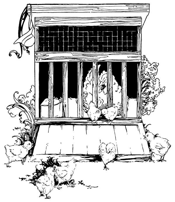 Original vintage illustration of hen in roost for children's short story The Little Red Hen