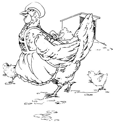Original vintage illustration of chicken wearing apron for children's short story The Little Red Hen