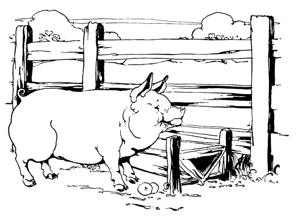Original vintage illustration of pig in sty for children's short story The Little Red Hen