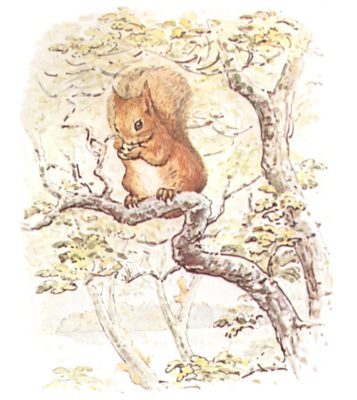 Original Beatrix Potter illustration of squirrel in tree, for Squirrel Nutkin bedtime story