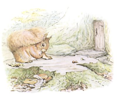 Original Beatrix Potter illustration of squirrel foraging nuts, for Squirrel Nutkin bedtime story