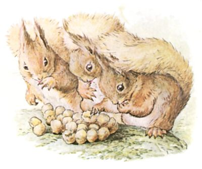 Original Beatrix Potter illustration of squirrels counting gathered nuts, for Squirrel Nutkin bedtime story