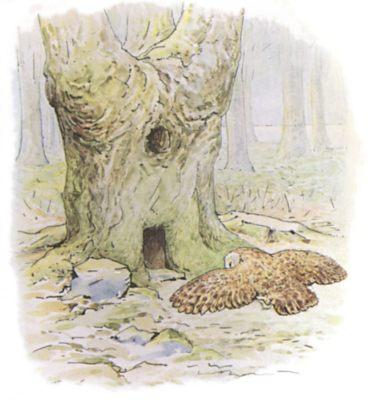 Original Beatrix Potter illustration of owl flying in forest, for Squirrel Nutkin bedtime story