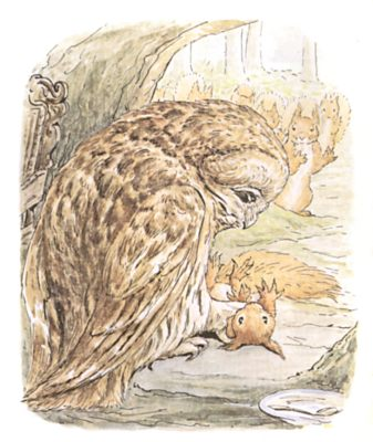 Original Beatrix Potter illustration of owl with trapped squirrel in claws, for Squirrel Nutkin bedtime story