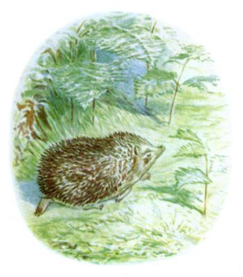 Beatrix Potter illustration of bare hedgehog for bedtime story Tiggy Winkle