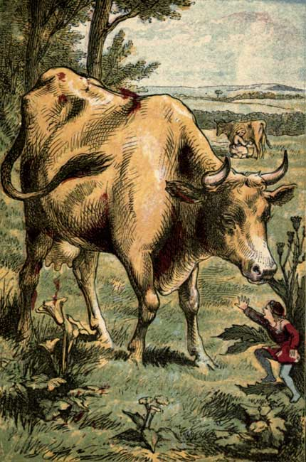 Vintage illustration of little boy being eaten by curious cow for children's short story Tom Thumb