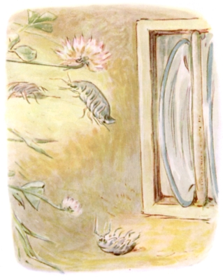 Beatrix Potter bedtime stories Tittlemouse crawly bugs