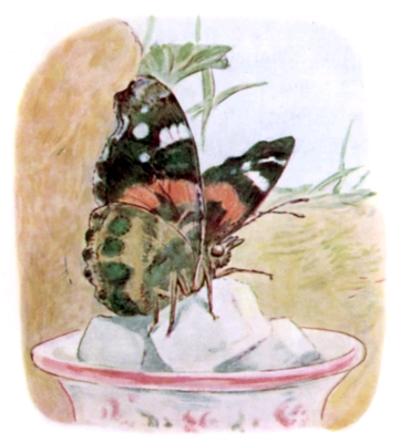 Beatrix Potter bedtime stories Tittlemouse butterfly on teacup