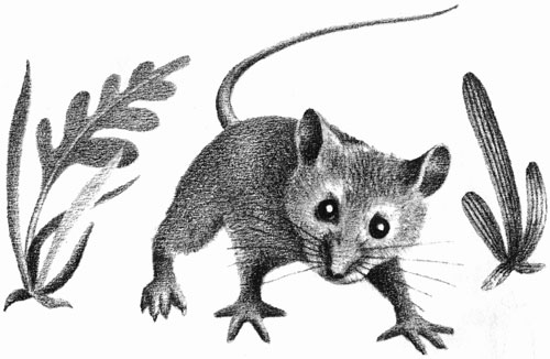 Children's illustration of forest mouse for story My Fathers Dragon