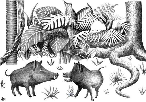 Children's illustration of two wild boars for story My Fathers Dragon