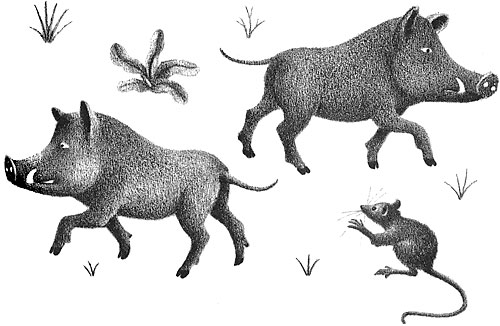 Children's illustration of two wild boars and a mouse for story My Fathers Dragon