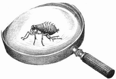 Children's illustration of magnifying glass and flea for story My Fathers Dragon